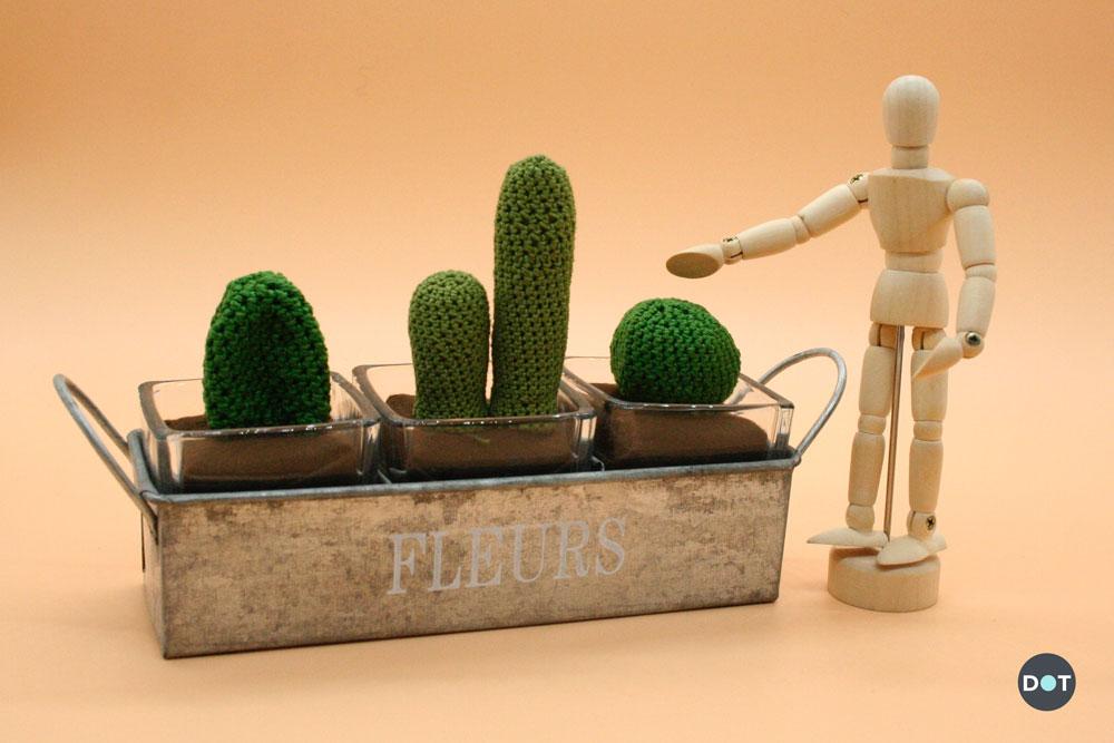 apertura-cactus